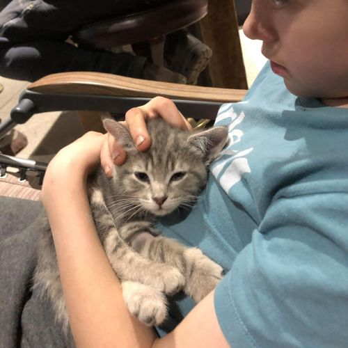 Sonic **2nd Chance Cat Rescue**