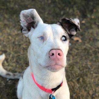 Maisie ~ $150 Adoption Fee ~