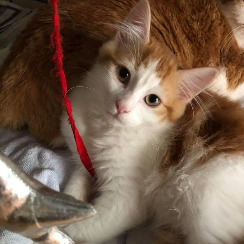 Rusty - Located in Templestowe