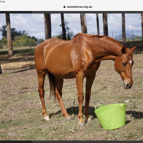 Esylium -  Horse