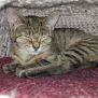 Photo of Shiloh **2nd Chance Cat Rescue**