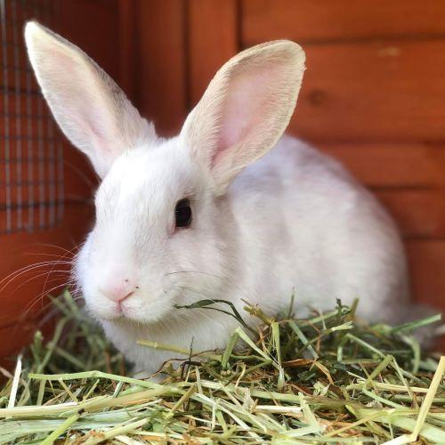 Love - Domestic Rabbit