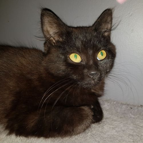 Lily Pop **2nd Chance Cat Rescue**