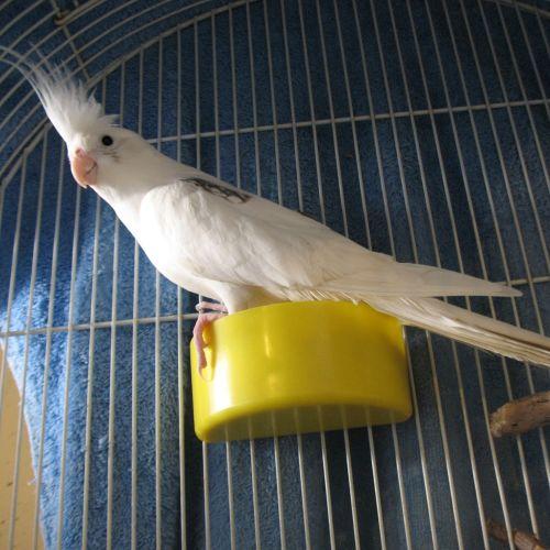 Pip -  Bird