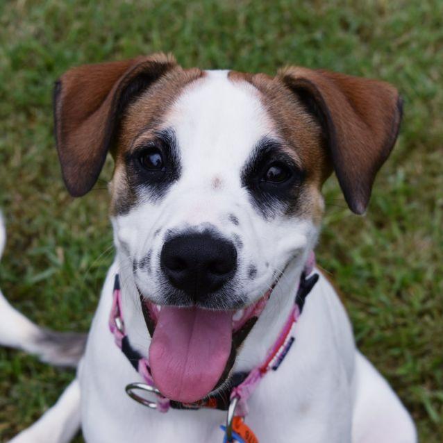 Photo of Lyndie (Adoption Pending)