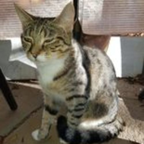 Shirley **2nd Chance Cat Rescue**