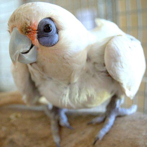 Blue Bell -  Bird