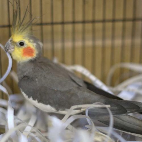 Hershey -  Bird