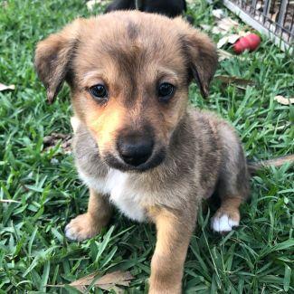 Gizmo ~ Adoption Pending ~