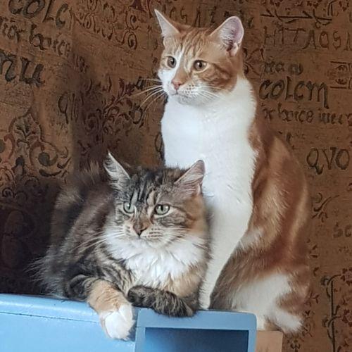 Bucky and Roxy