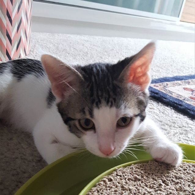 Photo of River ^^Dandy Cat Rescue^^