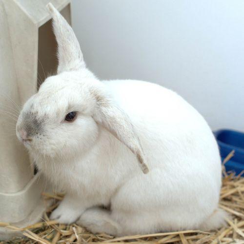 Cupcake -  Rabbit