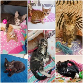 Rescue Kitten Showroom