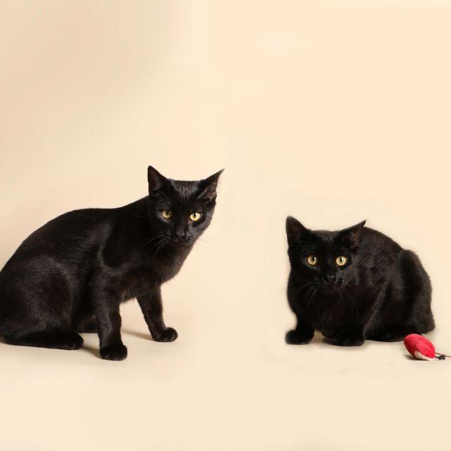 Photo of Kit & Joey