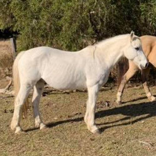 Basil -  Horse