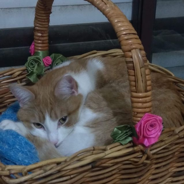 Photo of Castiel   Meet Me At Cat Lounge/Neko Hq Preston