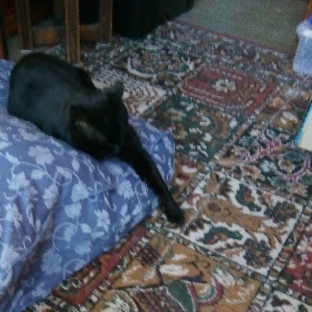 Photo of Bobby (Cat)