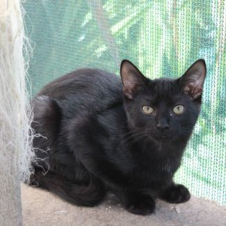 Duggie **2nd Chance Cat Rescue**
