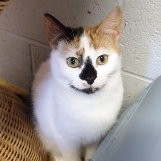 Photo of Mini Has Been Waiting So Long For A Home.