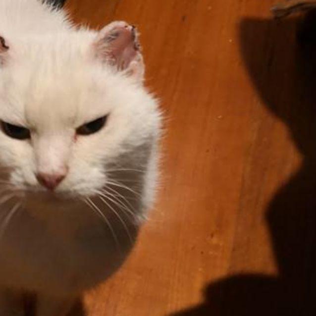 Photo of Marty Marshmellow   Meet Me Saturday @Neko Hq!
