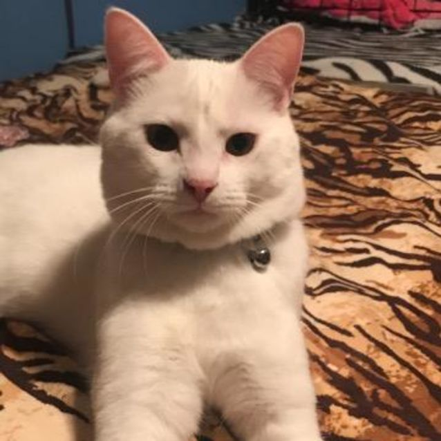 Photo of Ghost
