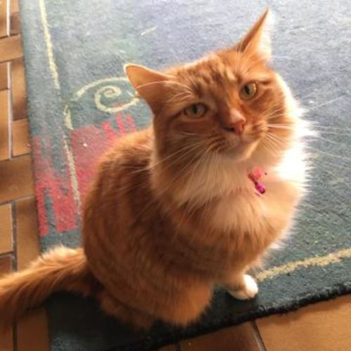 Fluffy **2nd Chance Cat Rescue**