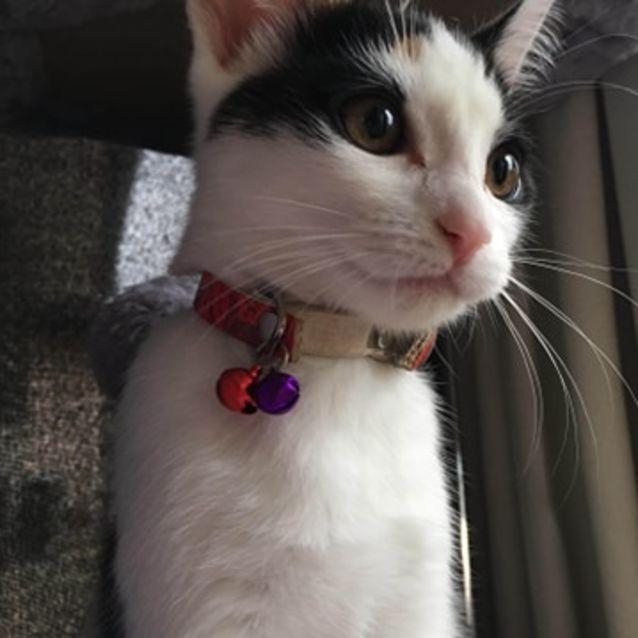 Photo of Ivy