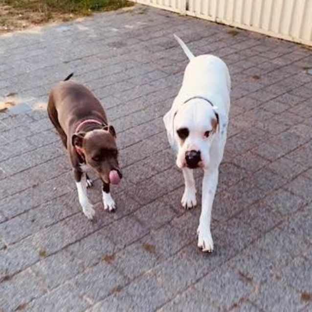 Photo of Diesel & Gypsy