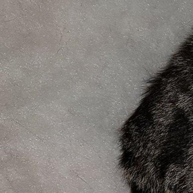 Photo of Gidget (Meet Me At Paw Prints   Diamond Creek)
