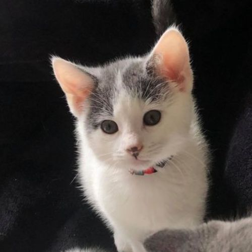 Boo **2nd Chance Cat Rescue**