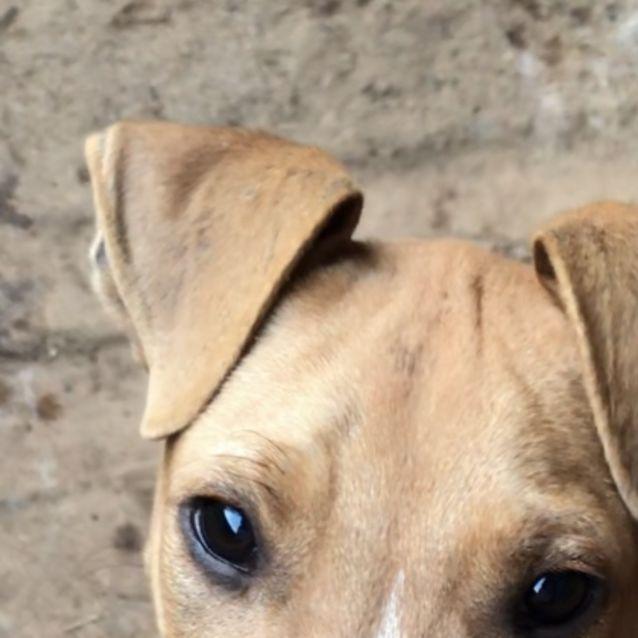 Photo of Bruno (On Adoption Trial)