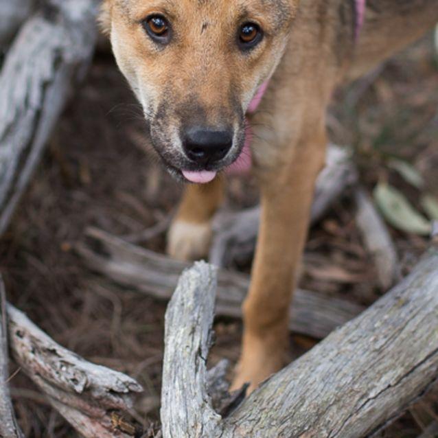 Photo of Holly   Dingo