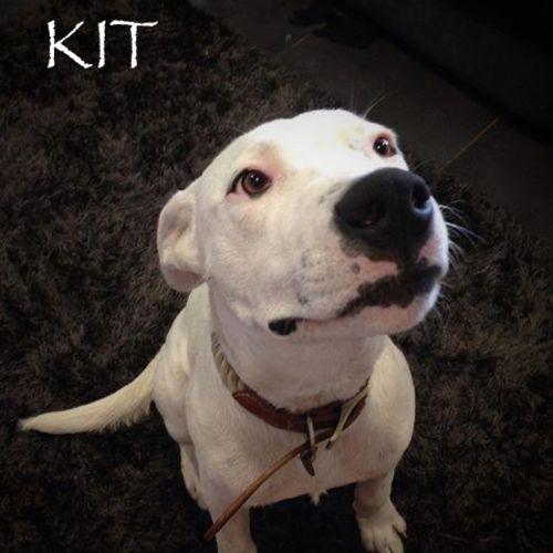 Kit - Mastiff Dog
