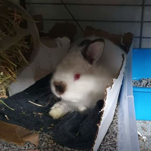 Jedd - Cashmere Rabbit