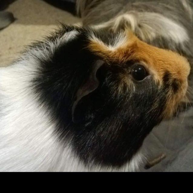 Photo of Zeus And Teddy