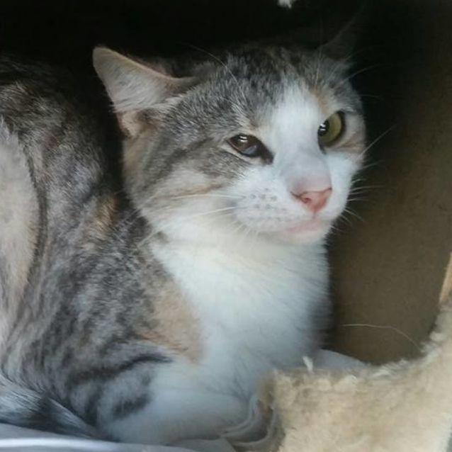 Photo of Sprite   Farm Cat / Mouser