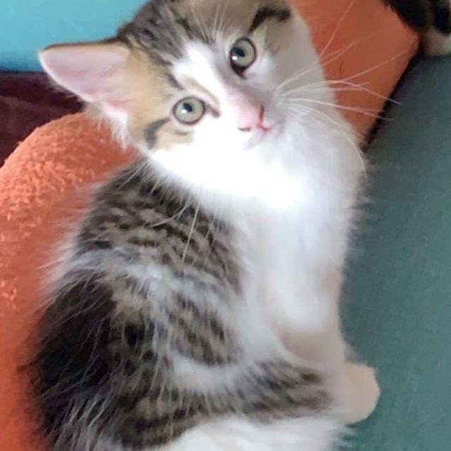 Photo of Teriyaki