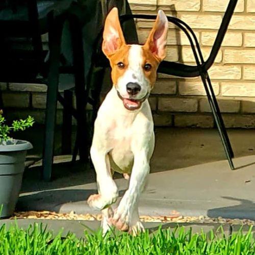 Java - Mixed Breed Dog