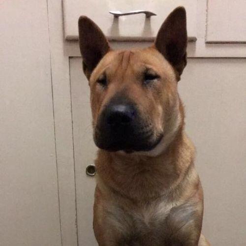 Adoptabull - Eddison - Bull Terrier Dog