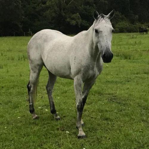 Alaska -  Horse