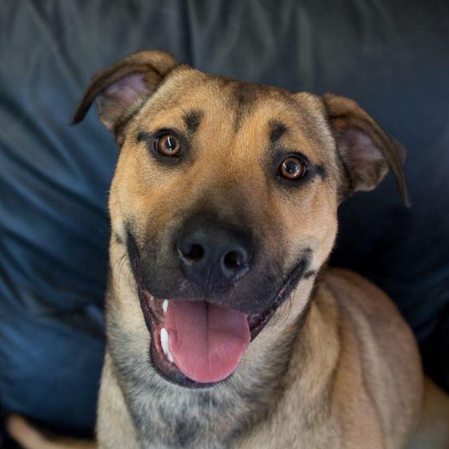 Photo of Benji (Adoption Pending)