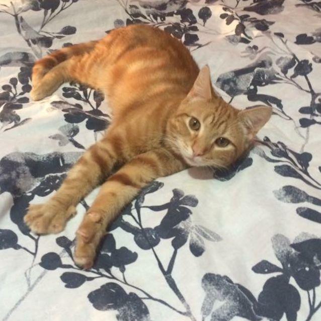 Photo of Sweet Byron. Adoption Fee Reduced