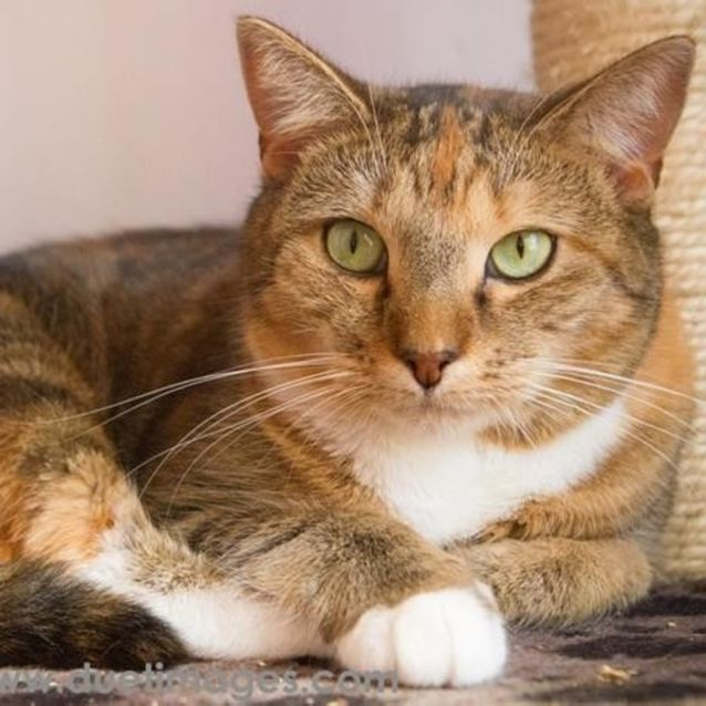 Photo of Rose **2nd Chance Cat Rescue**