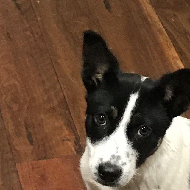 Photo of Peyton (On Adoption Trial)