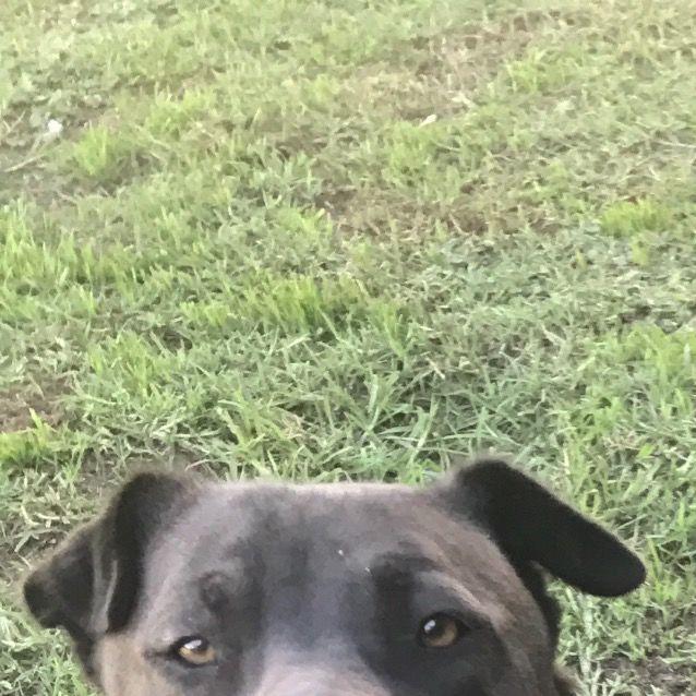 Photo of Milo (Now On Adoption Trial)