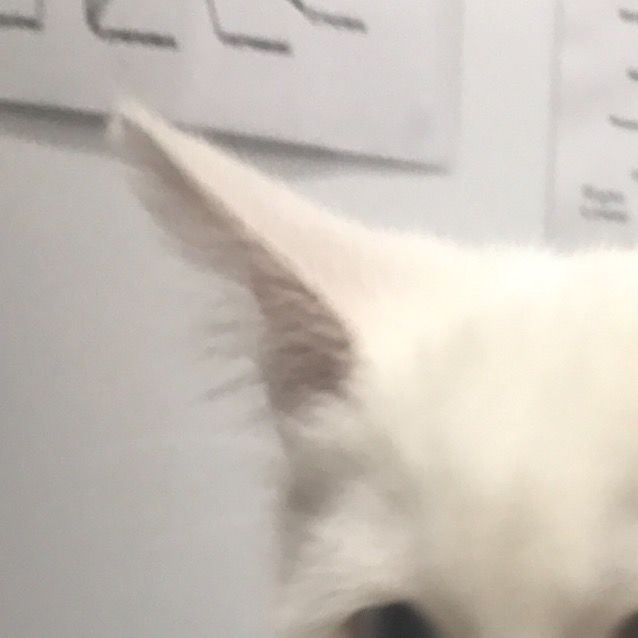 Photo of Possum (On Adoption Trial)