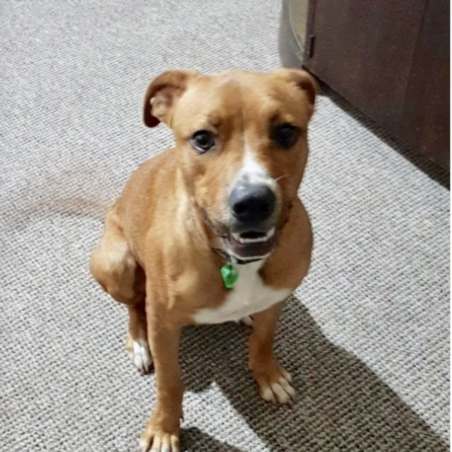 Photo of Banjo (Now On Adoption Trial)