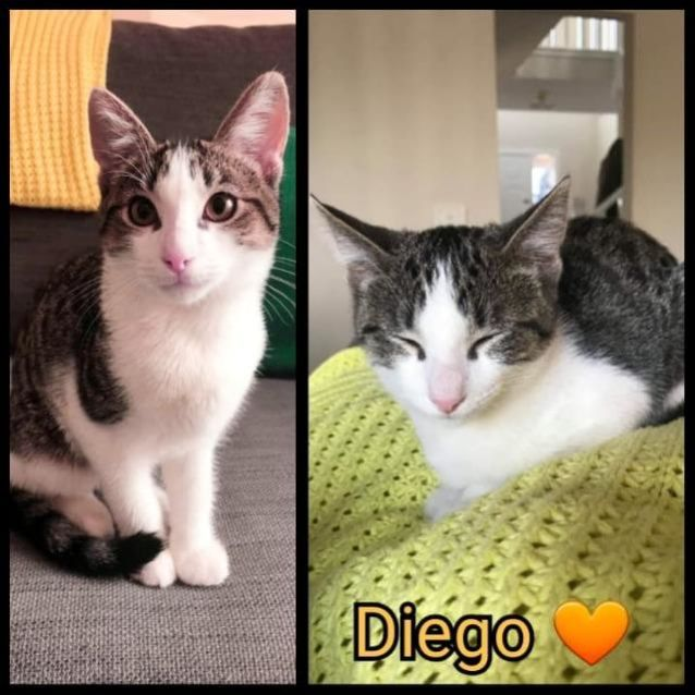 Photo of Diego