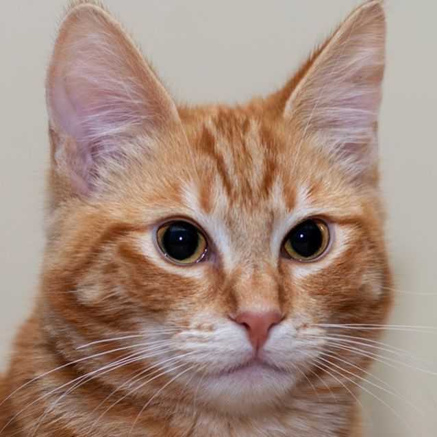 Photo of Dilmah **2nd Chance Cat Rescue**