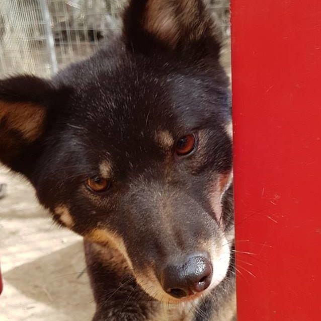 Photo of Merindah Dingo